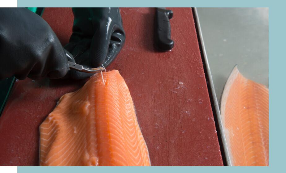 boning salmon